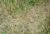 Field Ant Nest