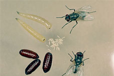 get rid of house flies in your house