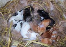 Rabbits Babies