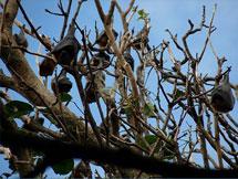 Tree Bat