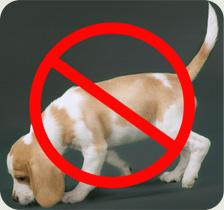 beagle-detector