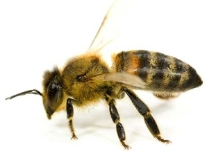Beyond Pest Control