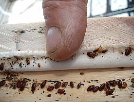 Choosing The Best Bed Bug Exterminator In New York Beyond Pest