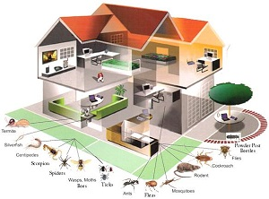 Reliable Pest Control Company