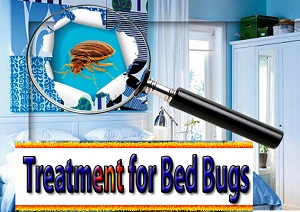 Temporary Treatment for Bed Bugs