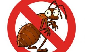 Annoying pests have