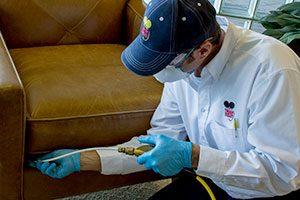 Pest control Preventive Measures