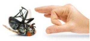 Pest infestation control