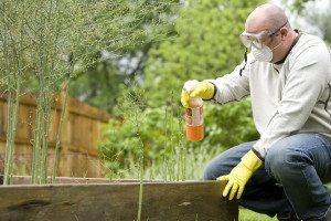 Understanding Gardening and Pest Control