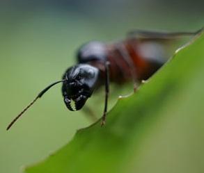 Understanding green pest control