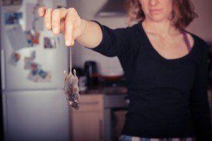 rid of mice